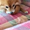 【ワンコのしつけ】〜犬のトイレ〜