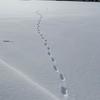 【1月7日のお写真】足跡