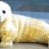 ツイッターで話題の世界の動物の赤ちゃんたちが可愛すぎてキュン死