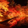 【弘前】秋と冬の弘前 弘前紅葉祭り・弘前城雪燈籠まつり【青森県】