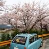 2015年最後の桜:その壱