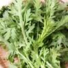 春菊の栄養と効能。冷凍はできる?選び方や保存方法