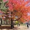 晩秋の札幌1泊2日。(1日目 北海道大学キャンパス内を中心に)