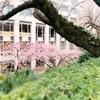 おサボりスポットで小さい春、見ーつけた♪【品川駅チカ日本庭園】