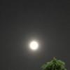 おぼろ月夜の、お月見
