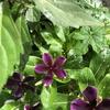 20118.0715.花