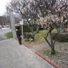 梅と天満宮とわん・2011 その壱