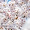 """今週の運勢(3/15~3/21)春分で""""新年""""がスタート"""