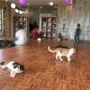 湘南にオープンした猫カフェ「空陸家」レビュー。オーシャンビューでうさぎとハリネズミにも触れ合える!
