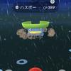 雨の日はハスボー狩り!!「ポケモンGO」