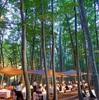 ブナ林で森林浴しながらのアウトドアダイニング - 松之山ダイニング