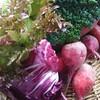 今日も新鮮なお野菜が沢山届きました