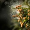 【城野親徳の美容コラム】家に花粉を持ち込まない! 花粉対策で肌荒れ防止