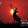 二十四節気七十二候 「冬至 雪下出麦」 (2016/12/30)