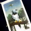 『感情に流されず、被害者にならず』今週のメッセージ 2/3 - 2/9