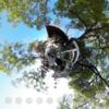 浅間神社 イベントを 360写真でチェック #360pic