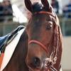 指名馬情報:牝馬第9位