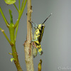 生き物散歩 ぐんま昆虫の森 その2 昆虫ふれあい温室とその他