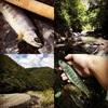 テンカラトリップ釣行記:2017年7月上旬の長野県の遠山川、遠州の宝石アマゴと肉厚イワナ