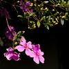 ブラジルで保護されている貴重な花
