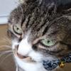 気になる猫の病気 涙目