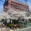 祝『傷だらけの天使』地上波! & 桜と万年筆 & オビは春の妖精