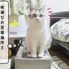 猫雑記 ~クローゼットの猫様達~