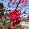 3/31・4/4  桜の精霊と音花見会を開催します🌸🌸🌸
