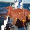 秋の氷下魚(コマイ)網漁がスタート