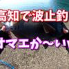 【フカセ釣り】高知の波止はパワフルファイター達が迎えてくれるぜぃ