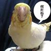 色々な表情をする鳥さん