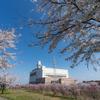 富山の桜_2020:富山市以外