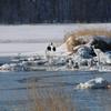 厳冬のオホーツク海沿岸を旅する(3) 〜濤沸湖に魅せられて〜
