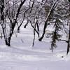 1月8日、9日の日月祝は土屋薬局お休みです。