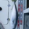 鯛ラバはハズレ、ブリジギングでアタリの週末釣行。