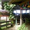 海辺のカフェでランチはアヤムペニェッ
