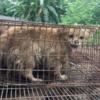 150万人が中国の玉林犬肉祭りを禁止する請願書に署名