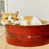 【猫学】なぜ猫は爪とぎをするのか?爪とぎの種類をわがやの爪とぎグッズとともにレビューします。