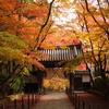 紅葉の御本山参拝ツアー好評です。ホッ・・・・