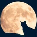 月のリーディング 星のジャーナリング
