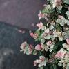 写真における「花鳥風月」