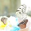 蝶の楽園はヘヴン感強めです。