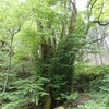 兵庫県)木の殿堂→兎和野の大カツラ→福岡ハチ北口バス停