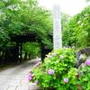 春には桜・梅雨には紫陽花が楽しめる【普願寺】