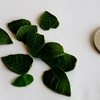 ミニチュアの観葉植物を作ろう🎵