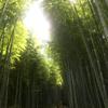 京都嵐山『竹林の道』は涼やかで美しい【CONGRATS  HOTEL  KYOTOと嵐山・嵯峨野】