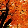 紅葉が綺麗だね!でも、今回はお菓子のブログだよ。