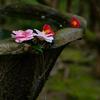 京都・鹿ケ谷 - 法然院の散り椿