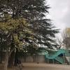 【宮前区公園紹介】宮崎台~宮前平近隣の公園についてまとめました