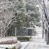 雪・雪・雪